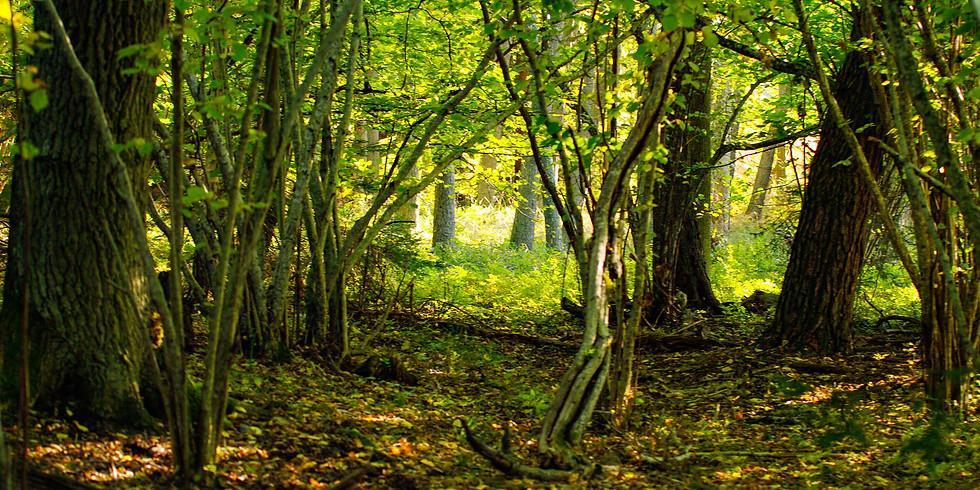 Guidad naturkontakt var du vill - skogsbad med on-lineguidning