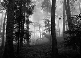 untitled (79 of 278).jpg