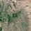 """Thumbnail: ケニア(キアンブ)""""カラトゥ ファクトリー"""" SL品種 ピーベリー"""