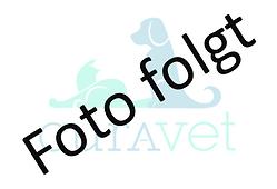 Placeholder_FOTO FOLGT.png