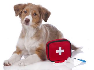 Reiseapotheke für Ihren Hund