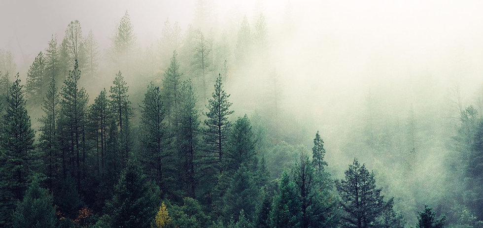 nature-forest-trees-fog_2.jpg