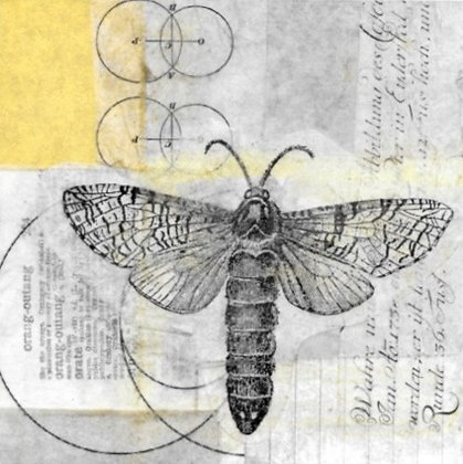 Dragonfly Unframed Print