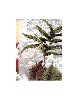 Fern Unframed Print