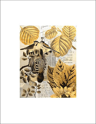 Zebra Unframed Print