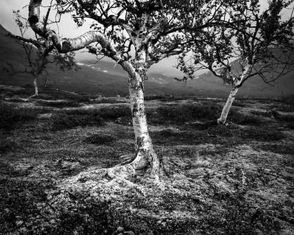 Ad Voss - Zweden National Park Abisko