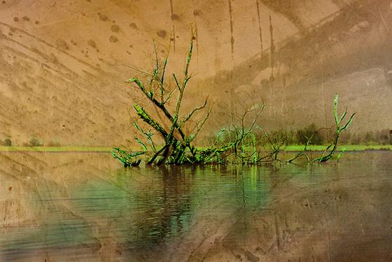 Foto D - Alfred van Rappard