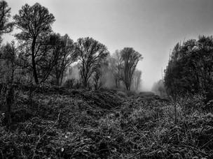 Natuur Solo - 2e prijs - Euwe van den Berg