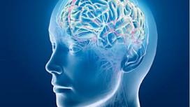 ☀️CAP Coaching☀️ La plasticité cérébrale et la regénérescence du cerveau