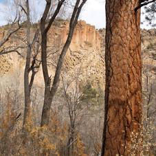 Los Frijoles Canyon