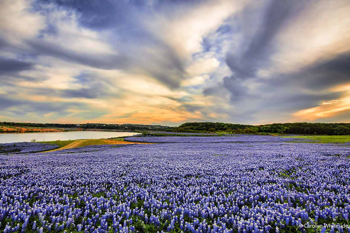 feature-wildflowers-highland-lakes.jpg