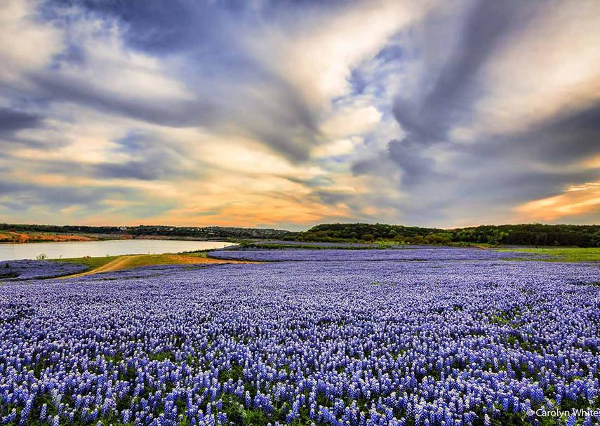 feature-wildflowers-highland-lakes.jpg
