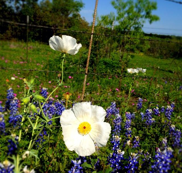 wildflowers.jpg