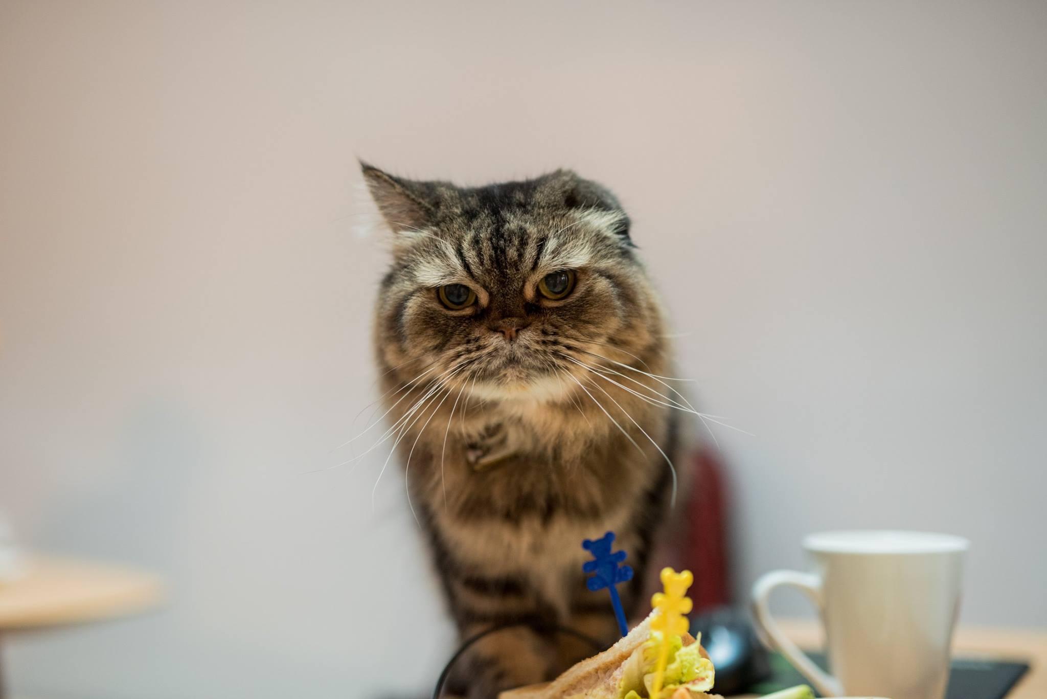 家裡的貓-妮妮
