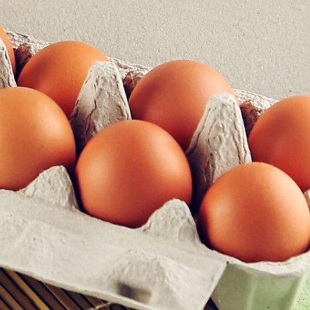 牛樟芝雞蛋6入