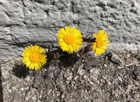 Auch am Berg wird's endlich Frühling..