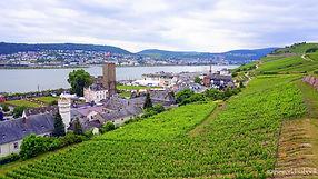 Rudesheim-am-Rhine-Germany-vineyards.jpg