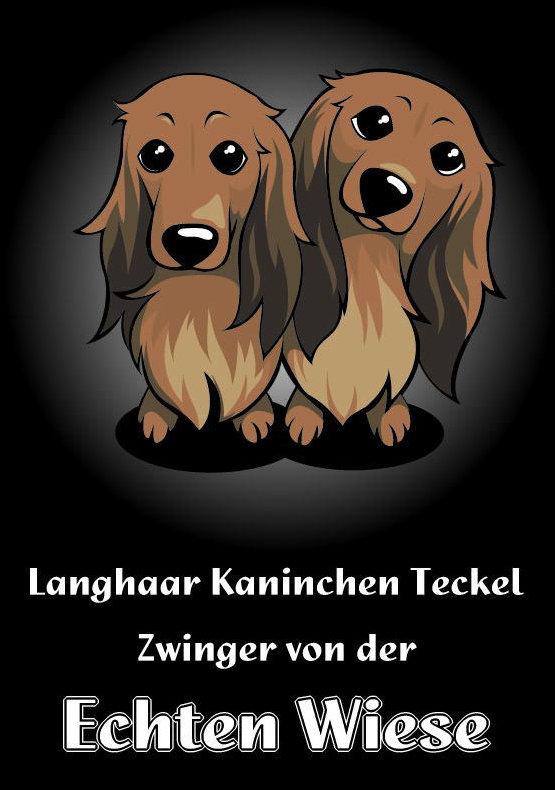 Echten Wiese <エヒテンヴィーゼ> カニンヘンダックス ミニチュアダックス ロングがほとんどですがワイアとスムースもいます。仔犬や交配、ドッグショーのお問合せはContactよりお願いします。