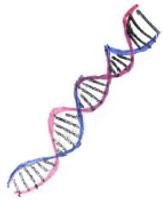 ADN 0.PNG