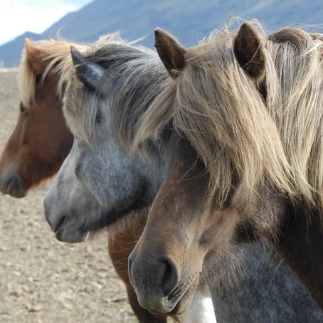 Akupunktur und Kräutertherapie bei Kotwasser und equinem Asthma –Fallbericht aus der Pferdepraxis