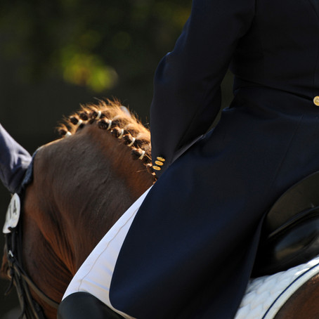Akupunktur und Vitalpilze bei Magenproblemen – Fallbericht aus der Pferdepraxis