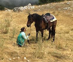 passeggiate a cavallo dolomiti