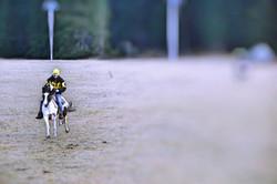Amazing Gallop