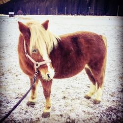 Giulia - Pony
