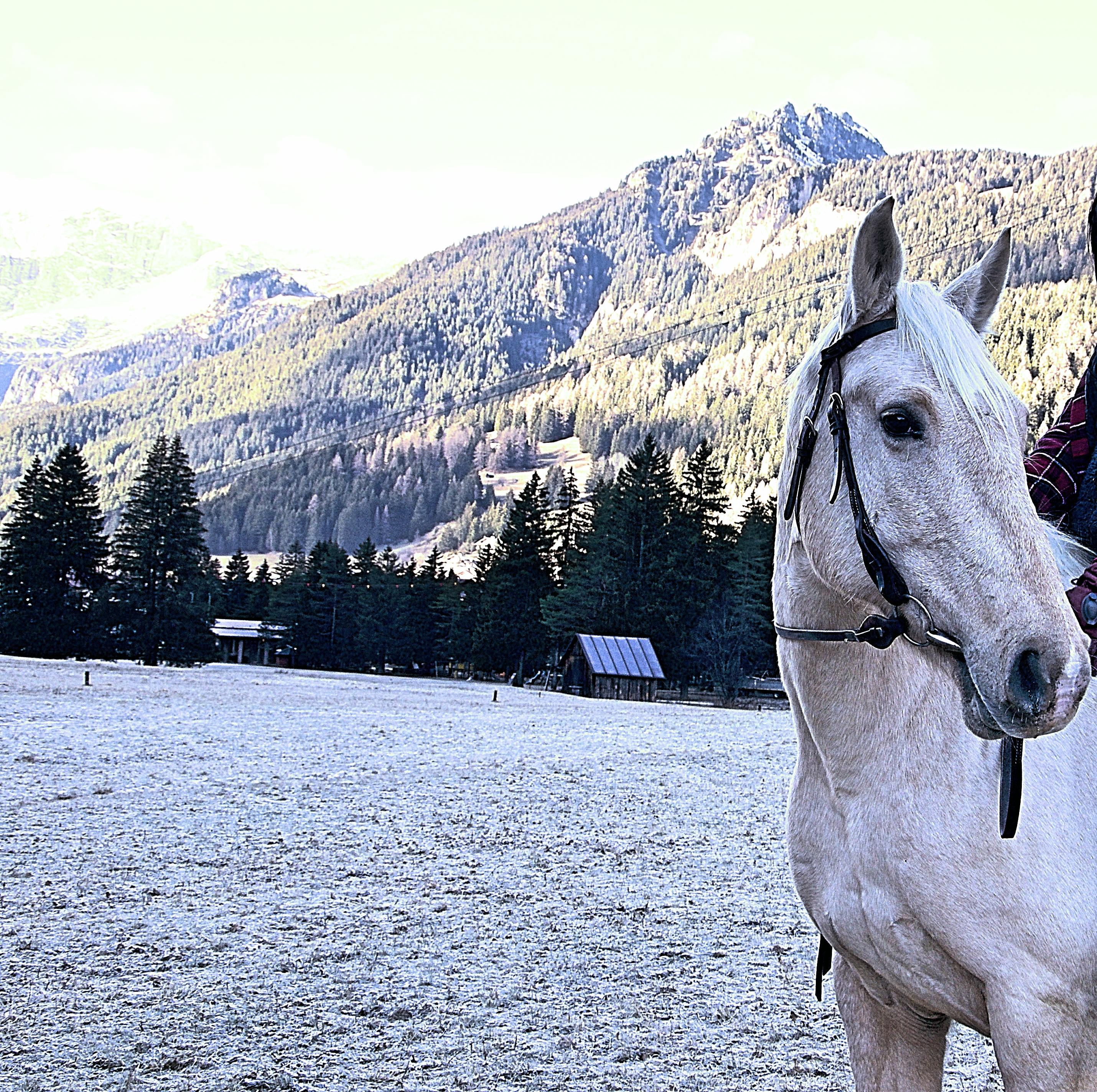 Nespola - Argentinian Horse