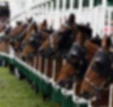 corse di cavalli