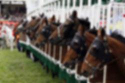 Rennpferde stärken ohne Doping
