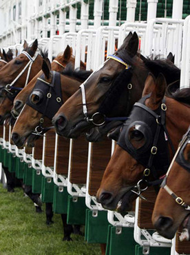 Publically Contested Horse-Races Don't Usually End Well