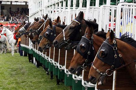 Thoroughred Horses