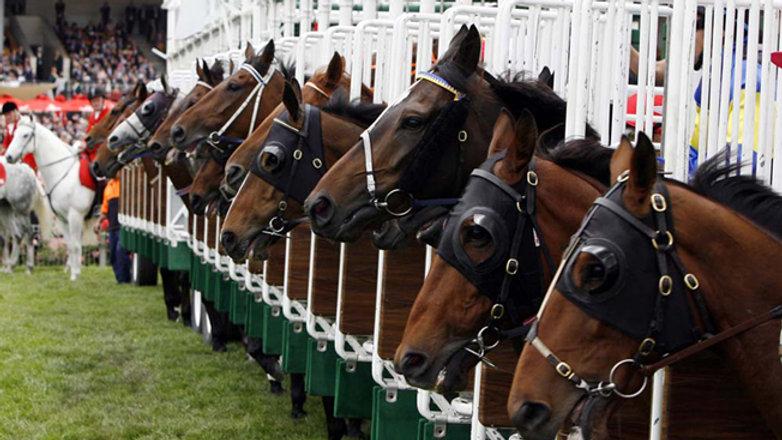 Class Fourteen -Racehorse to Riding