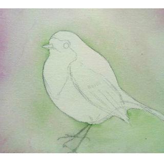 Sophie Wild Robin hand drawn logo