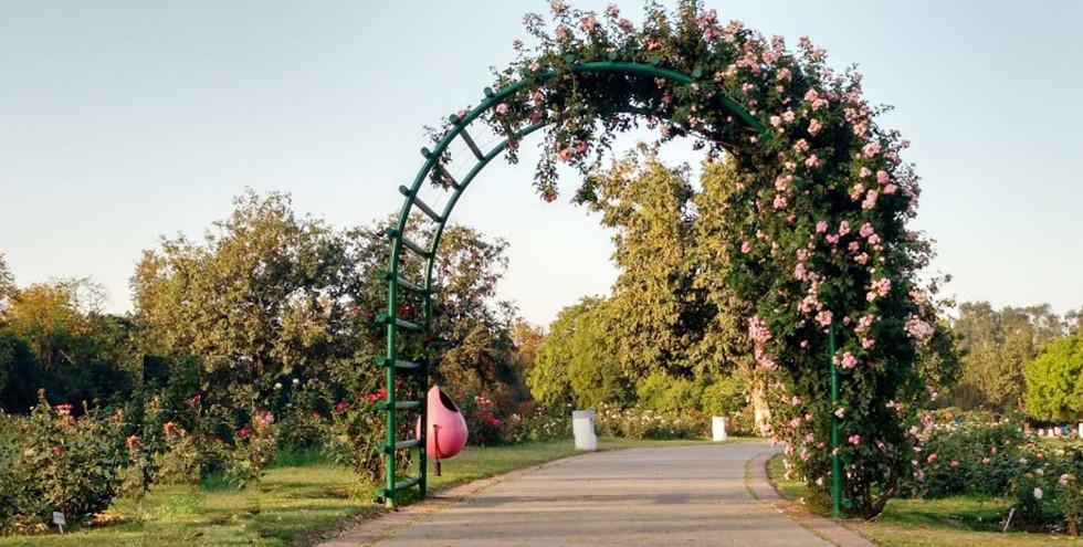 zakir-hussain-rose-garden-chandigarh-tou