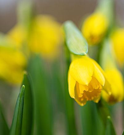 Narcis | Het Aandachtshuis.jpg