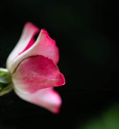 Roos | Het Aandachtshuis.jpg