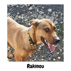 Rakinou
