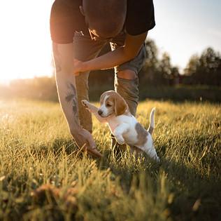 Beagle on ihmisrakas koira