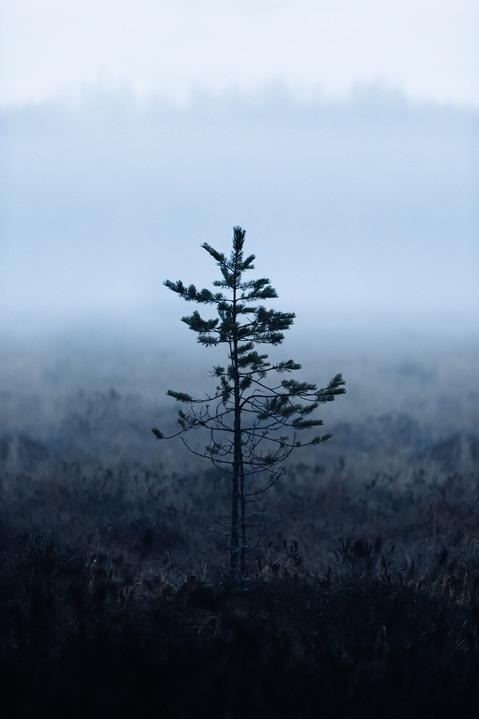 luontokuvausyritykselle-valokuvaaja-sisällöntuotanto-somekuvat