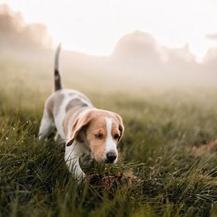 Yksisilmäinen koiranpentu