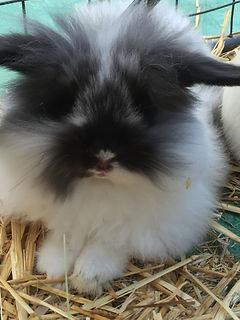 rabbit simba.JPG