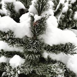Den snötäckta