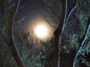 Maj Fullmåne