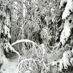 Snötyngd