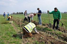 Heckenpflanzung von Wikiwoods