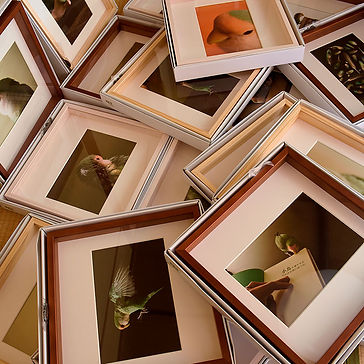 小鳥ガーデンの展示_MGO9987.jpg