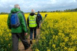 Spring-Walk-thro the rape field