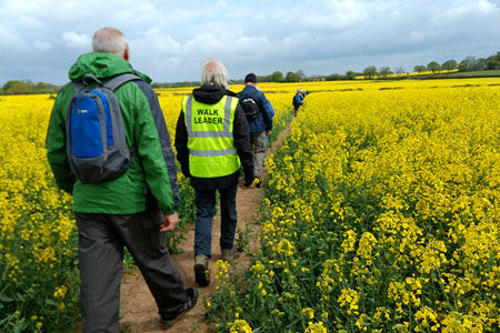 Spring-Walk-thro the rape field